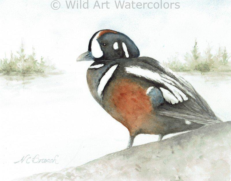 Harlequin Duck Glicee Fine Art Print